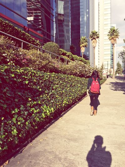 Rear View Of Woman Walking On Sidewalk By Plants