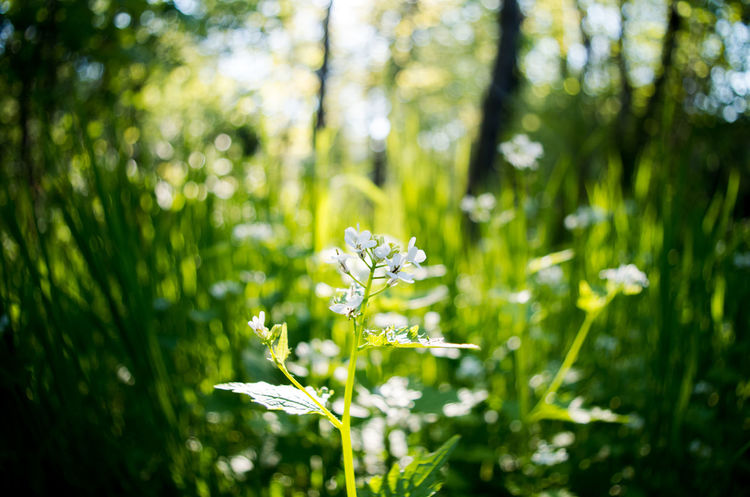 Beauty In Nature Day Flora Flower Fragility Freshness Green Green Color Growth Nature No People Outdoors Peaceful Spring Vegetation