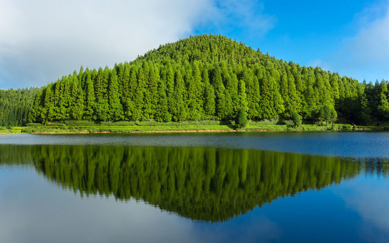 Lagoa das empadadas lake surrounded by green pine forest located on sao miguel, azores