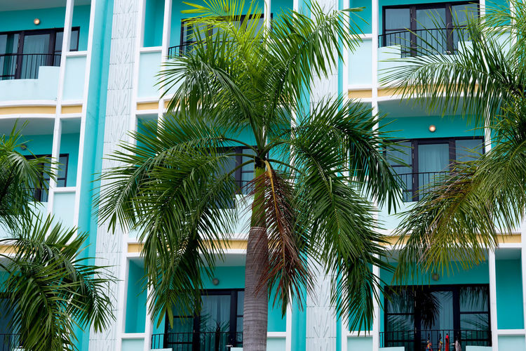 An Art Deco building facade in Pattaya city, Thailand Tropical Climate Palm Tree Built Structure Architecture Building Exterior Building Plant Tree Day Green Color Window City Low Angle View Leaf Palm Leaf Tropical Tree Apartment In A Row Repetition Pattern Design Art Deco Style Photography Pattaya Thailand