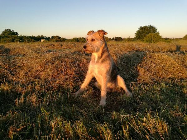 Enjoy the sunset Animals Animal Love Animal Portrait First Eyeem Photo Sunset Sunset Lovers Dog Love Dog Walking EyeEm Nature Lover EyeEm Animal Lover EyeEm Gallery Sunsetlover Hund Sonnenuntergang Entspannung Genießen Sommer Sommerfeeling