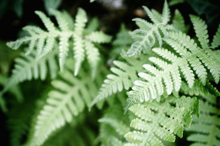 Ferns Spring Green Springtime