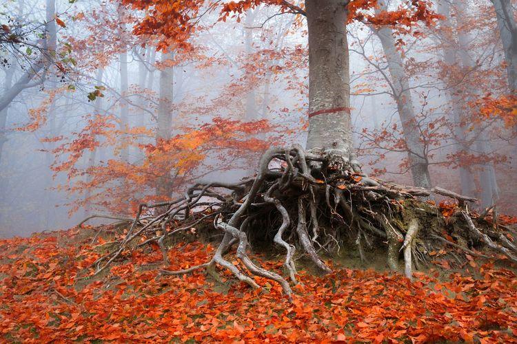 Dry Leaves By Tree