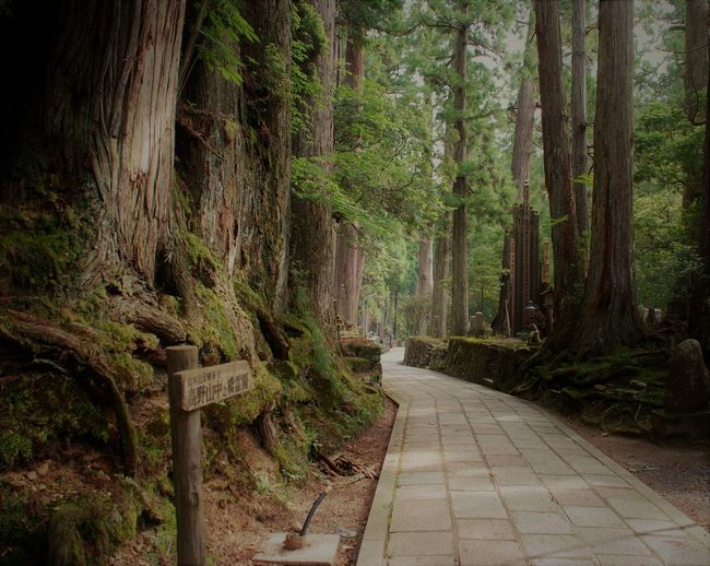 2013 Beauty In Nature Day Forest Japan Cimentary Koyasan Japan Nature No People Oku No In Outdoors Tree