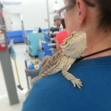 I pet this little guy at Wal-Mart today :) Beardeddragon