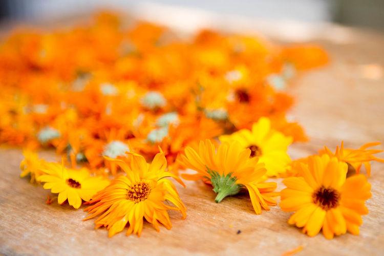 Healing right🌼 Antioxidants Calendula Color Of Life Color Palette Daisy Orange Orange Color Pharmacy