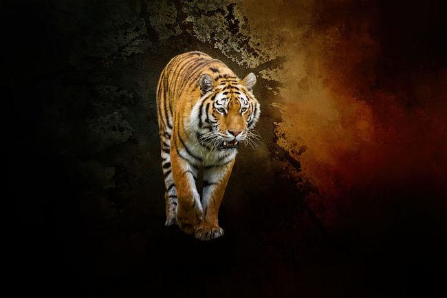 Siberian tiger Big Cat Big Cat Tiger Photo Big Cat. Big Cats Paint Painted Image Painted Pictures Painting Painting Art Paintings Siberian Tiger  Siberian Tigers Tiger Tiger Love Tiger-love Tigers