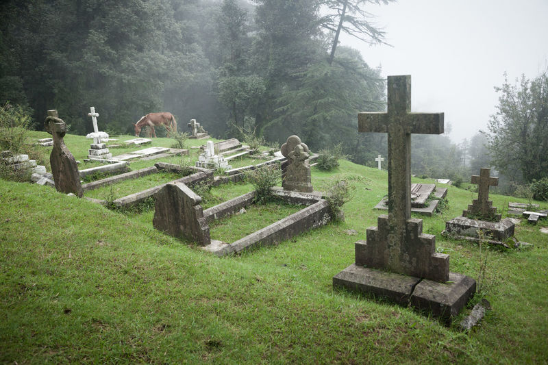 Cemetery Cross Day Fog Grass Grave Gravestone Graveyard Memorial Nature No People Outdoors Sadness Spirituality The Past Tombstone Tranquility Tree