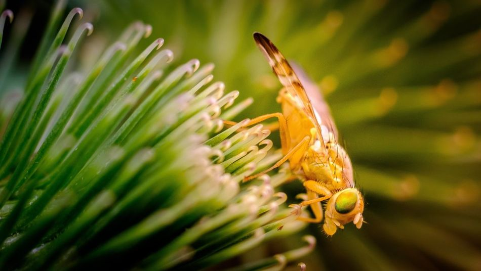 Fliege auf Klette One Animal Animals In The Wild Insect Nature Animal Themes Plant Flower Close-up Green Color Animal Wildlife No People Growth Outdoors Beauty In Nature Day Focus On Foreground Fragility Flower Head Fly Makro Photography Macro Photography Zeiss Planar 60mm Fuji-xe2s Tenebrio.photos