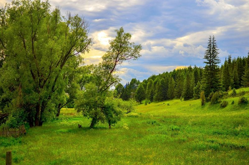 Russian Nature Russian Forest Beautiful Nature Beautiful Russia Great Russia