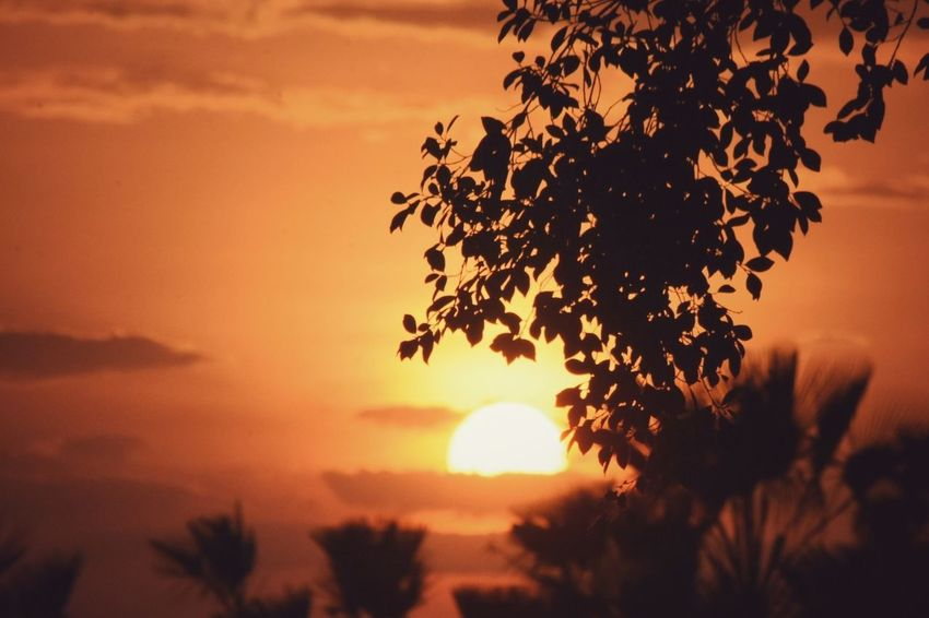Sunset Orange Color Tree Silhouette Nature Landscape Yellow Rural Scene Brasil Photography Photographer Nikon Nikon D3200 Nikonphotographer Parnaíbafotoclube The Week On EyeEm Sun Beauty In Nature Batalha Do Piauí Vitória De Baixo