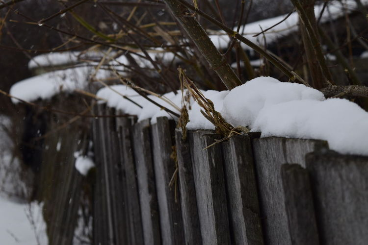 Close-up of snow covered branch