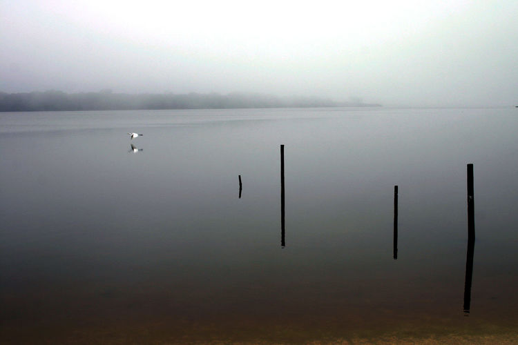 Beauty In Nature Day Egret Florida Fog Nature No People Outdoors Scenics Sky Tranquil Scene Tranquility Water Waterfront