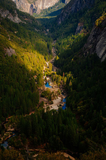 Looking down the Yosemite Valley. Autumn California National Park Parks And Recreation Pine United States Yosemite Yosemite National Park Beauty In Nature Forest Forest Trees Landscape Mountain Nature No People Outdoors Pine Tree Scenics Shadows Tree Yosemite Valley Lost In The Landscape The Great Outdoors - 2018 EyeEm Awards