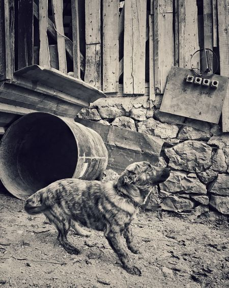 A dog Animal Themes Mammal No People Wood - Material Domestic Animals One Animal Pets Day Outdoors Building Exterior EyeEm Ready