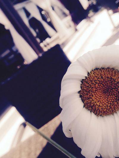 Flower in Greece.