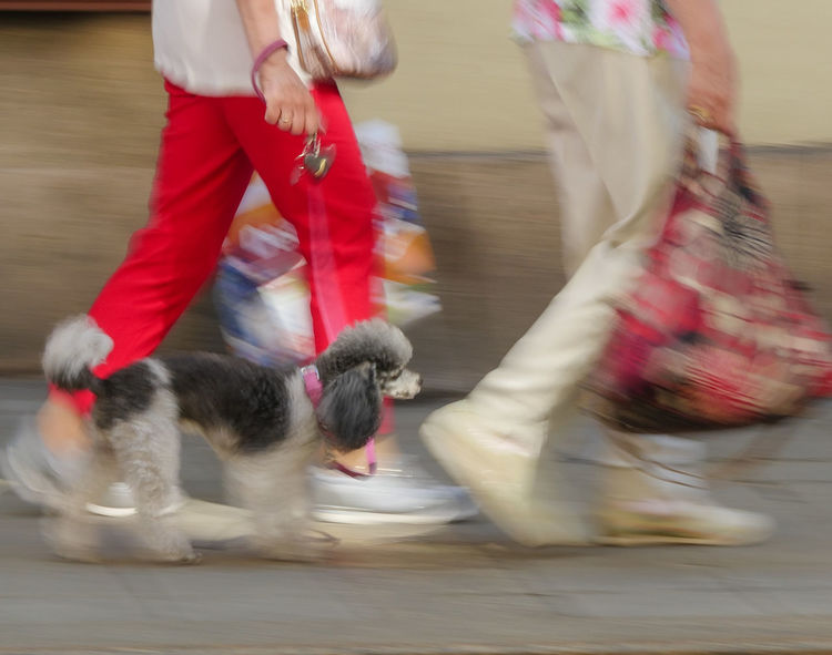 Poodle poetry....... in motion! https://youtu.be/EjjMH_PdCvI Fabulous 1960's song! Shopping EyeEm Best Shots Eyeem Different Different View My Perspective Speed Of Motion Fashion Ladies Poodle Dog Cute Dog  Poetry In Motion Https://youtu.be/EjjMH_PdCvI Low Section Motion Pets City Speed Defocused Blurred Motion