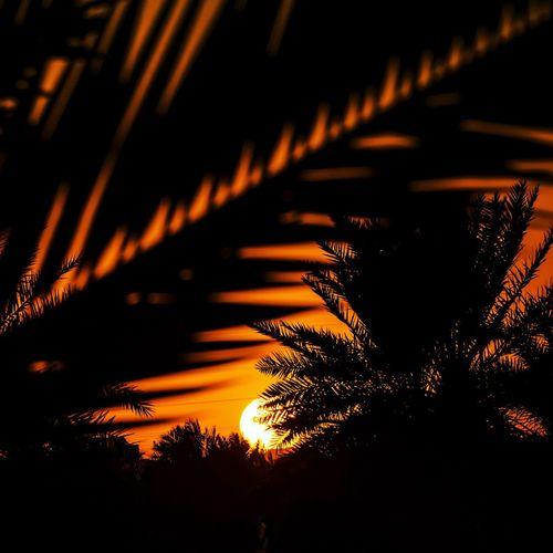 Sunset in Saudi