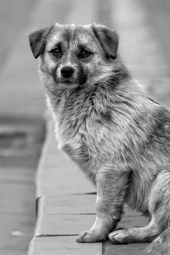 守候 One Animal Animal Themes Mammal Pets Domestic Animals Dog No People Portrait Close-up Indoors  Day Pomeranian Alone Lonely