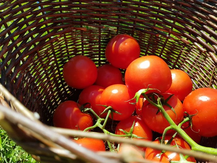 Tree Fruit Red Basket Agriculture Tomato Close-up Sky Food And Drink Green Color