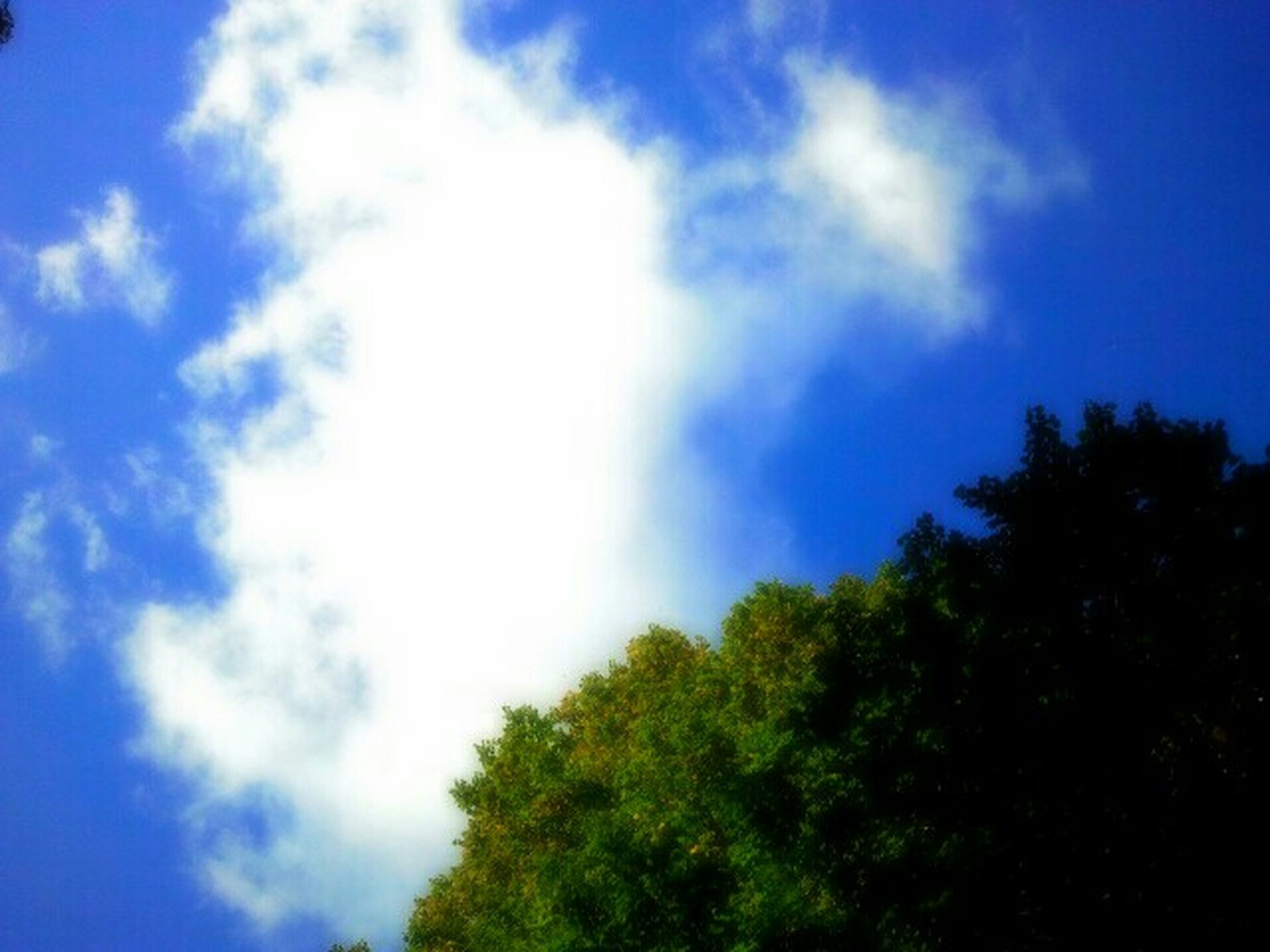 sky, low angle view, blue, tree, tranquility, cloud - sky, beauty in nature, nature, scenics, tranquil scene, cloud, growth, cloudy, day, outdoors, idyllic, no people, green color, sunlight, high section