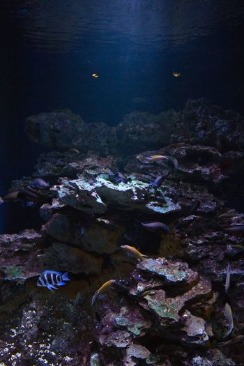 Life illuminated. Life Water Tranquility Sea Zoo Brookfield Zoo Rock Formation Fish Coral Blue Ethereal