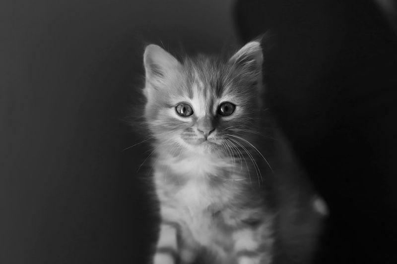 Close-up portrait of kitten by black cat