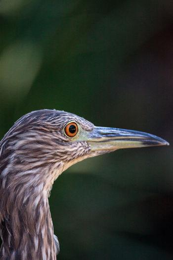 Close-up of bird outdoors