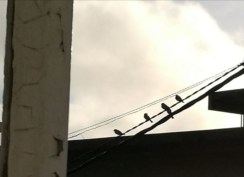 Low Angle View Built Structure Perching Birds Outside Photography Telephone Line