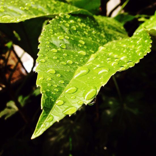 Nature On Your Doorstep Raindrops Leaves Green Green Green Green!