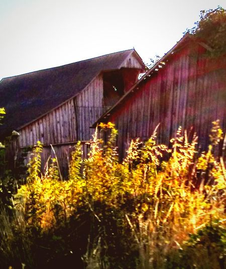 I want to take this Barn Apart and make some Furnitere Reclaimed Wood - Material Relaxing Textures And Surfaces Natural Light Photography Natural Light Portrait Color Palette Colour Of Life Barn Spotter Barnstalker Barn Spotting Barnhouse Reclaimed By Nature Wild Flowers And Grasses Vegitation Life Everywhere