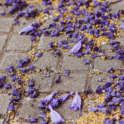High angle view of purple flowers on sand