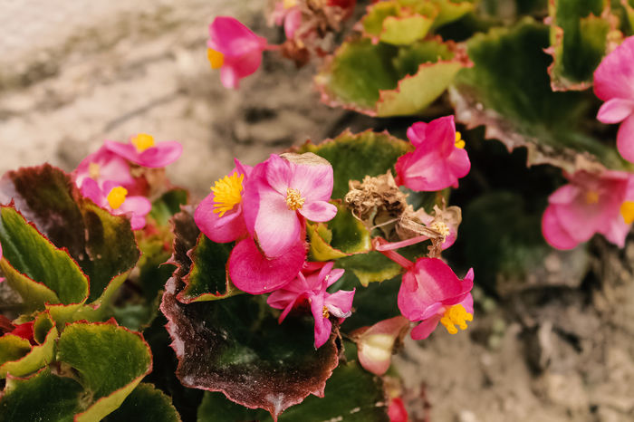Beauty In Nature Day Flower Flower Head Fragility Growth Nature No People Outdoors Petal Pink Color Plant shoted with Canon EOS 1100 d