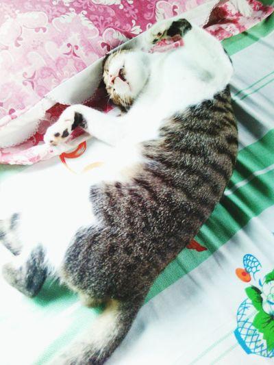 Thisishowhesleep Furfriend
