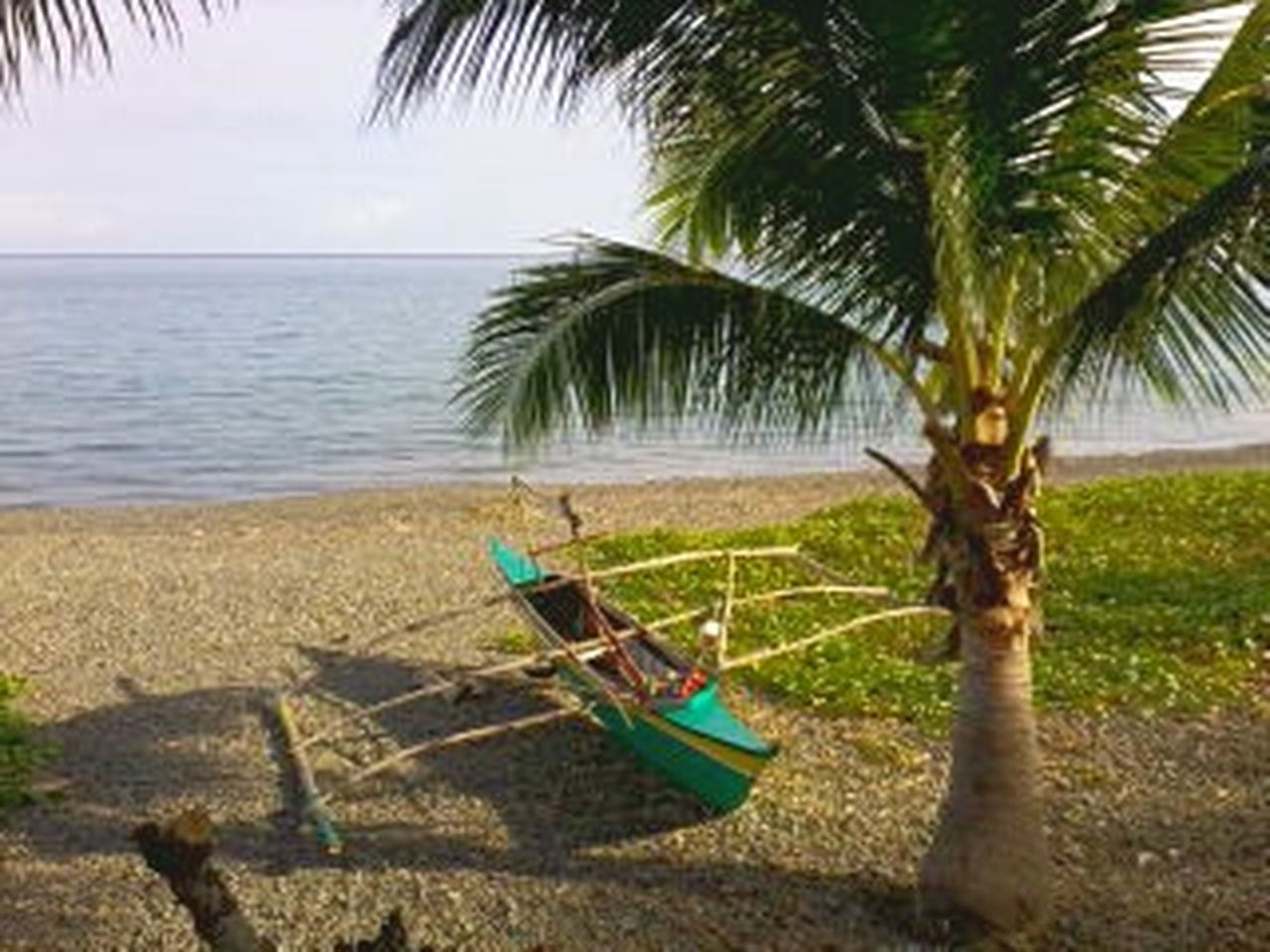 palm tree, sea, beach, water, sand, tree, nature, day, no people, horizon over water, outdoors, nautical vessel, beauty in nature, sky