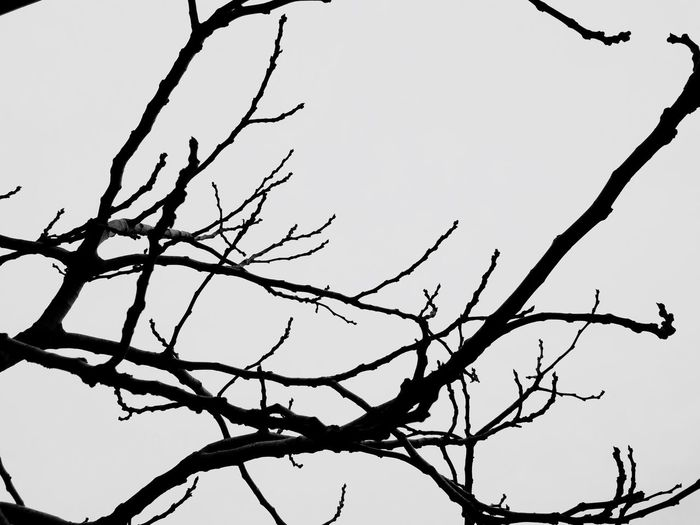 Branch Tree Low