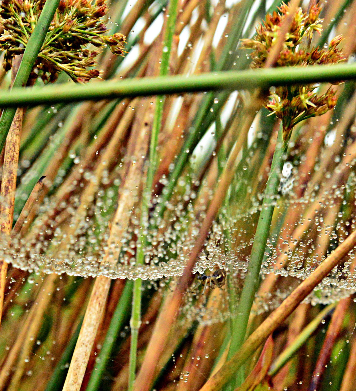plant, growth, nature, day, no people, beauty in nature, selective focus, close-up, wet, water, green color, tree, outdoors, land, tranquility, drop, field, grass, freshness, blade of grass, bamboo - plant, dew, raindrop
