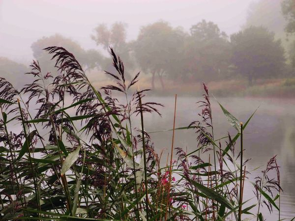 Schalkenmehren Beauty In Nature Day Foggy Morning Nature No People Outdoors Scenics Sky Tranquil Scene Tranquility Perspectives On Nature
