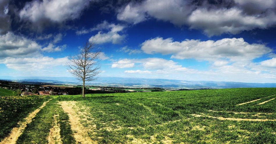 Landscape Field Agriculture Nature Cloud - Sky Outdoors Seeland Switzerland
