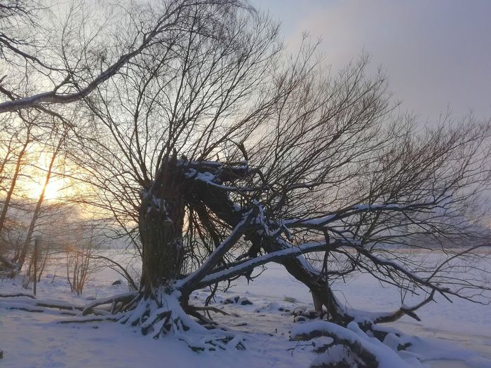 Winter Nature No People Outdoors Snow Tree Cold Temperature Beauty In Nature Sky By The Sea Finland Landscape Beauty In Nature Sunrise Leafless Tree Broken Tree Minusdegrees Shades Of Winter