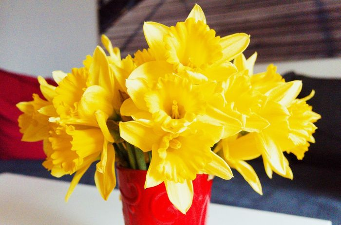 Petal Yellow Flower Freshness Flower Head Close-up Indoors  No People Fragility Day Nature