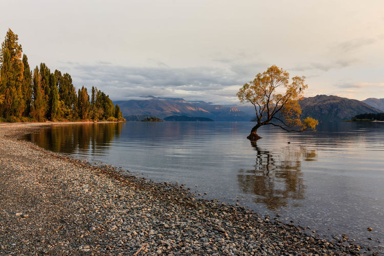 A spindly, crooked tree that appears to have grown up out of a lake has become an unlikely internet star and the most photographed tree in New Zealand. The crack willow tree of Lake Wanaka, in New Zealand's South Island, has been photographed tens of thousands of times, with queues of photographers routinely forming on the lake's shore to capture its beauty. Now referred to as #thatwanakatree on social media, the tree – which is technically a weed – has a dedicated Facebook page, features in tens of thousands of posts on Instagram and often attracts hundreds of tourists at sunrise and sunset. https://www.theguardian.com/world/2017/mar/31/new-zealands-thatwanakatree-becomes-social-media-sensation Water Sky Tree Beauty In Nature Tranquility Scenics - Nature Lake Mountain Cloud - Sky Nature Reflection Idyllic Mountain Range Wanaka Tree New Zealand EyeEm Nature Lover My Best Photo