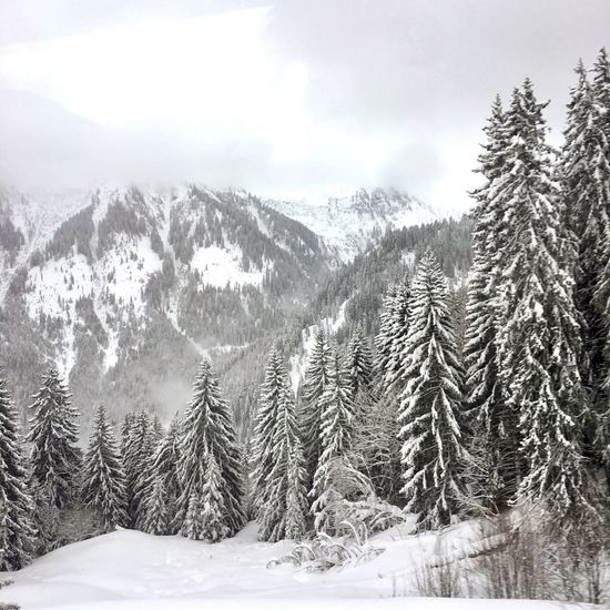 French Alps Morillon Samoens Haute Savoie Alps Winter Cold Temperature Snow Nature Tranquil Scene Tree Beauty In Nature Mountain Landscape Forest