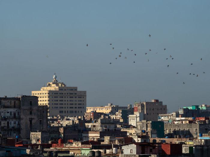 Birds flying over buildings in city of havana, cuba