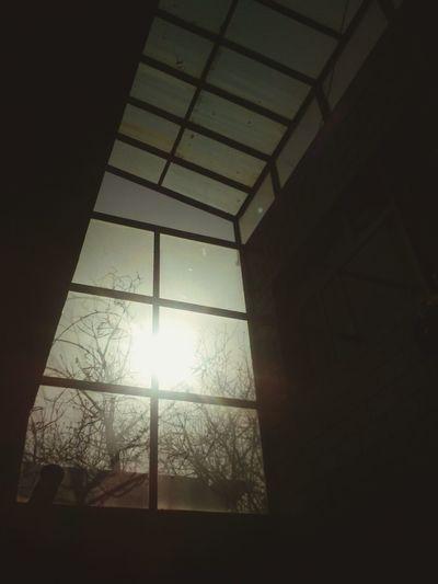 三年的日夜陪伴,今年就要离开了。留下这片我经常仰望的天空
