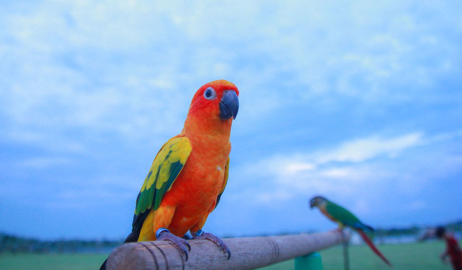 Parrot Animal Wildlife Animal Bird Animal Themes Vertebrate Perching Macaw Animals In The Wild One Animal Day Focus On Foreground Sky Nature No People Full Length Close-up Blue Outdoors Multi Colored Tropical Bird Rainbow Lorikeet Profile View