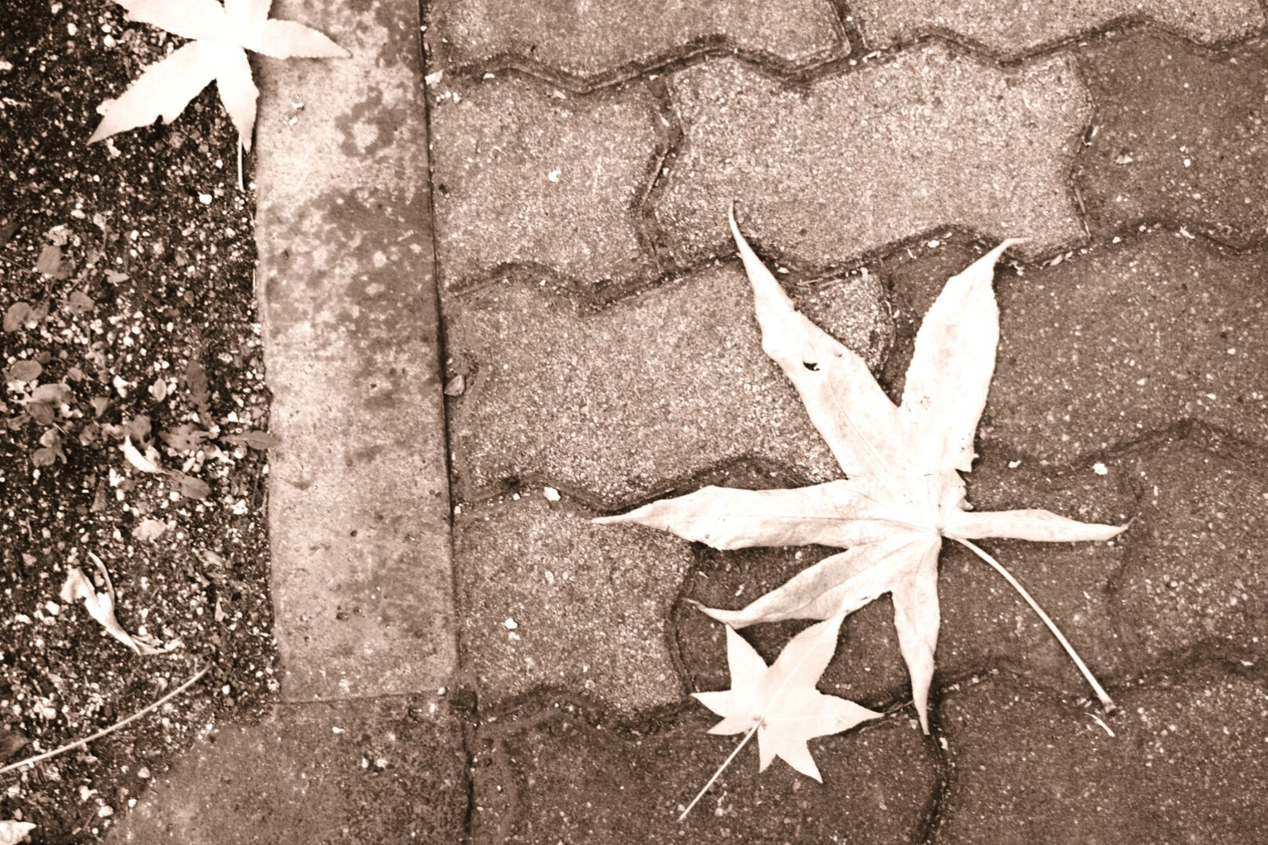 star shape, close-up, high angle view, creativity, art and craft, day, art, outdoors, no people, sunlight, maple leaf, white color, textured, shadow, leaf, nature, asphalt, paper, pattern, still life