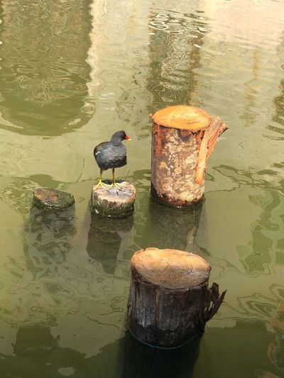 Pigeon Wild Nature Life Pigeons Aniamls Water No People Reflection Nature High Angle View Lake Sunlight Outdoors