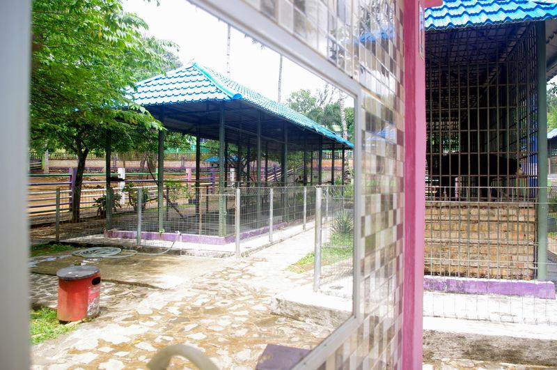 Mini Zoo Mini Zoo Bintan Mini Zoo At Platform Mirror Animal Themes Architecture Building Exterior Built Structure Day Mirror Reflection No People Outdoors Tree