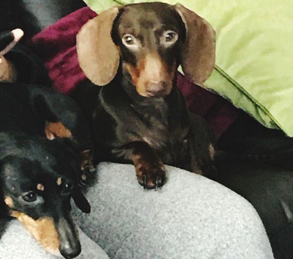 Julia & Leo Sausage Dog Dauschund Dogs Life